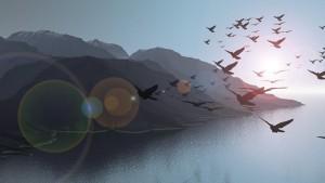 Beautyful-Scenery-Flying-Bird-Collection-HD-Wallpapers-Dekstop