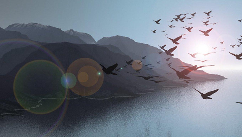Freedom Birds Flying Hd Wallpaper Bird: Mid-Cities Worship